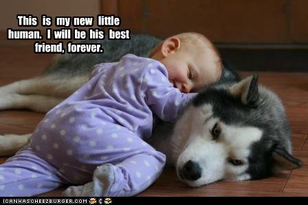 baby,captions,cuddles,dogs,husky,love,Pillow,protect