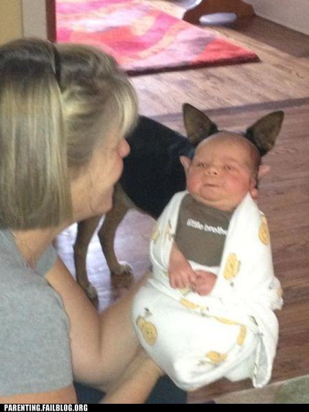 baby dog ears - 6516535040