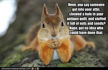 break in,chewed,hole,innocent,no idea,nuts,quilt,seeds,squirrel