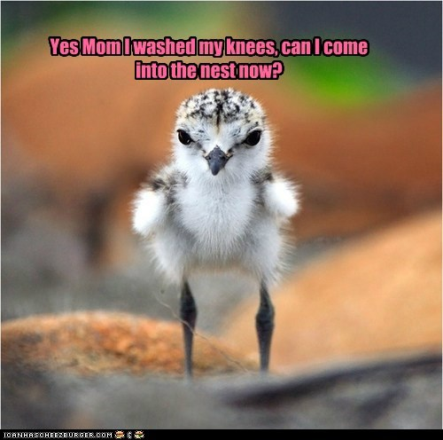Yes Mom I washed my knees, can I come into the nest now?