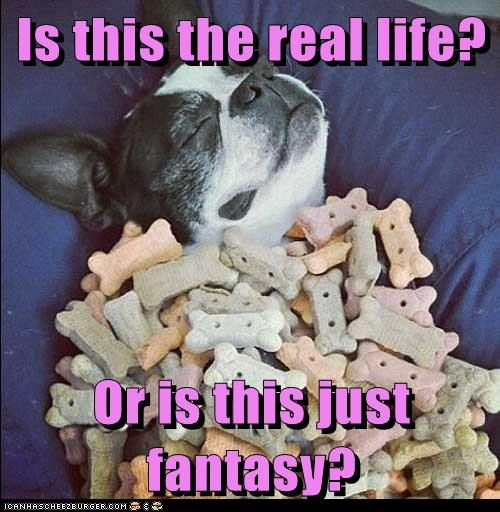 bohemian rhapsody,boston terrier,captions,dogs,fantasy,heaven,queen,treats