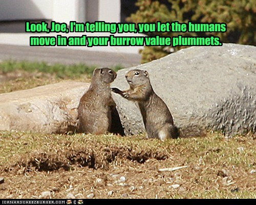 burrow,humans,move in,prarie dogs,prejudice,property value