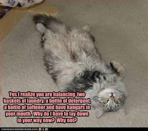 captions Cats in the way laundry roadblock rude - 6516866048