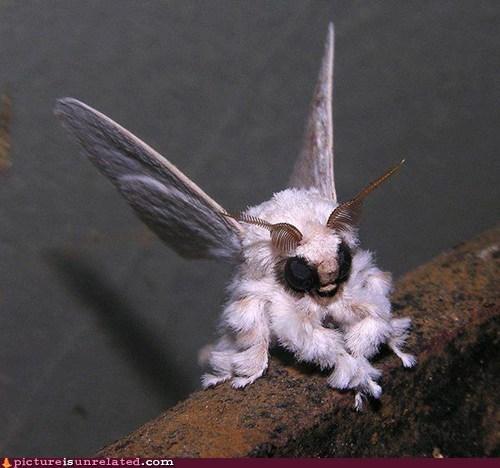 cool moth poodle Venezuela wtf - 6516891392