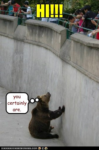 annoyed bear hi high loud Staring zoo - 6516900608