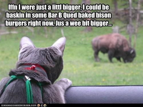 Cheezburger Image 6516944384