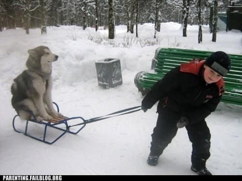 dog sled snow - 6516998144
