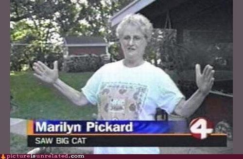 big cat Channel 4 news - 6517054976