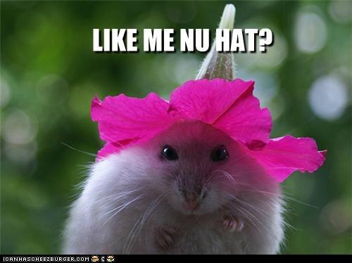 LIKE ME NU HAT?