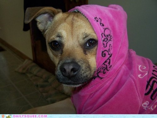 diva,dogs,hoodie,pet,pink,reader squee,what breed