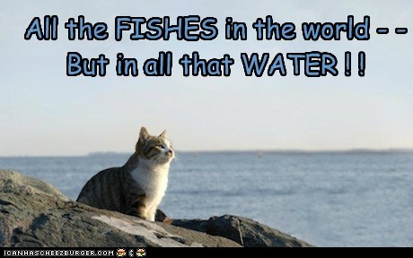 All the FISHES in the world - - But in all that WATER ! !