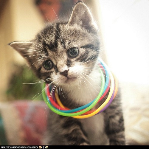 armbands,bracelets,Cats,colorful,cyoot kitteh of teh day,kitten,necklaces,raves
