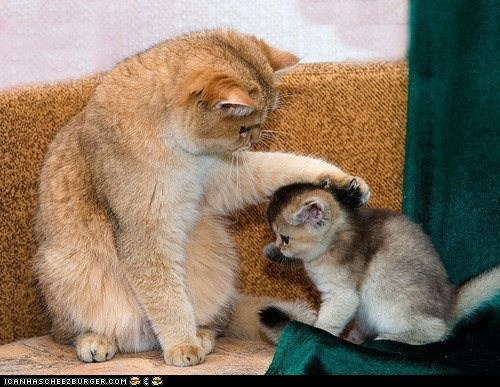 Cats comforting cyoot kitteh of teh day kids kitten moms parents pat on the back there there - 6517469696