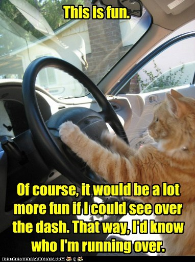 fun drive car captions Cats run over - 6517736192