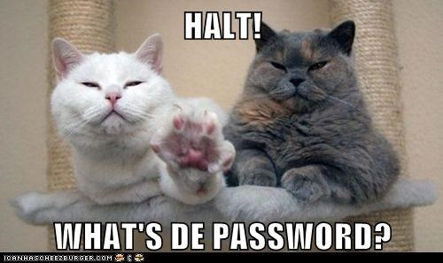 captions,Cats,guards,halt,password,stop