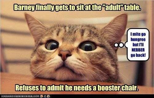 captions Cats dinner short small - 6518624768