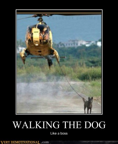 dogs helicopter leash Like a Boss