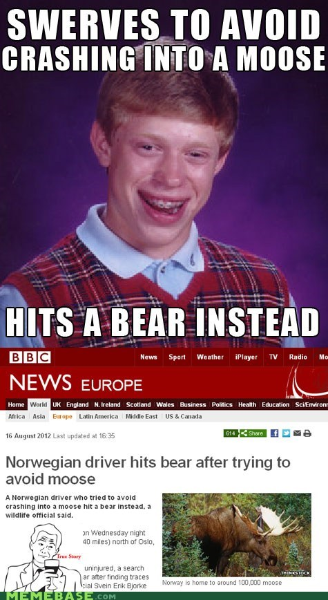 bad luck brian,bear,car,driving,me gusta,moose