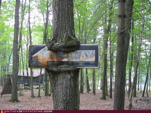 om nom nom,one way,tree,wtf