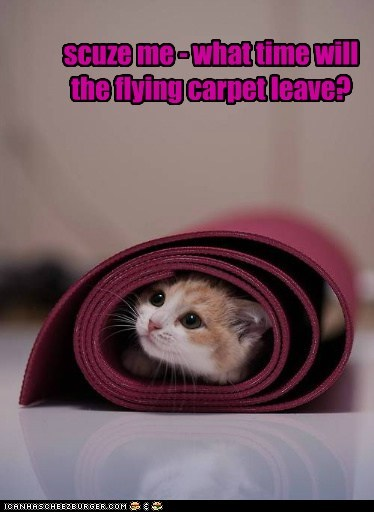 captions Cats depart flying carpet magic carpet time yoga mat
