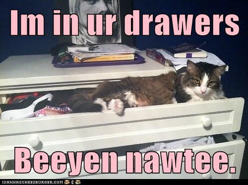 captions Cats drawerss naughty panties pants underwear
