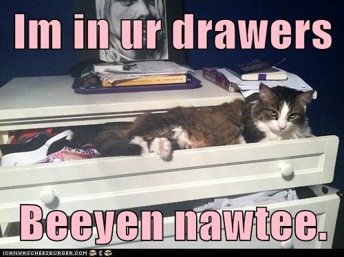 captions Cats naughty pants underwear - 6519220736