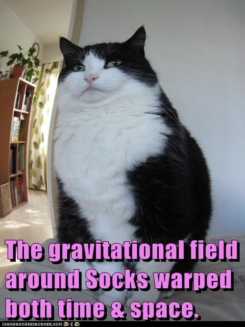 captions Cats fisheye Gravity Mass physics space time