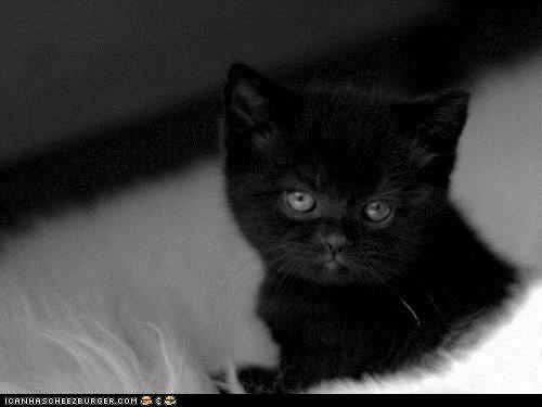 black cat appreciation da black cats Cats cheezburger blog holidays - 6519370496