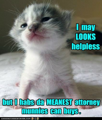 attorney captions Cats lawyer watch out - 6519373312