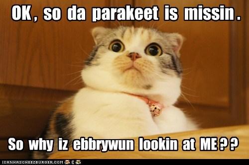 birds captions Cats eat guilty nom parakeet - 6519399168