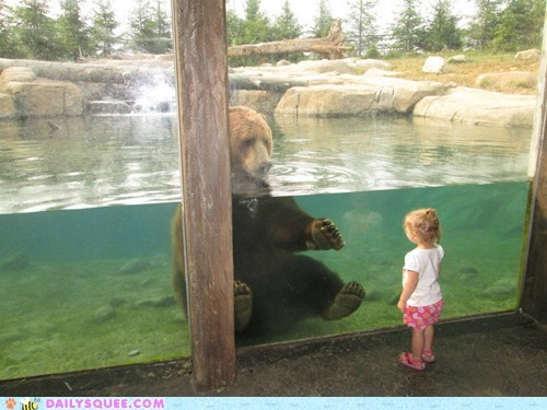 zoo grizzly bear bear squee little girl