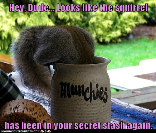 dude eating high munchies squirrel stash