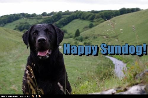 dogs,field,happy sundog,Sundog,tongue,what breed