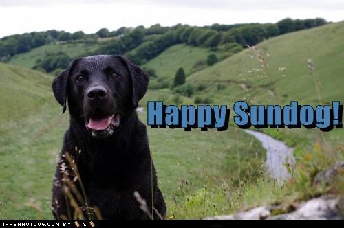 dogs field happy sundog Sundog tongue what breed - 6520001792