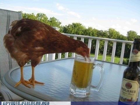beer chicken hen funny hennessy