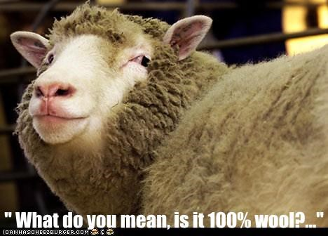 personal,question,sheep,what do you mean,wool