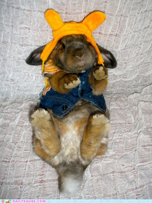 bunny costume happy bunday hat rabbit sunshine - 6520342272