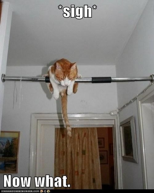 now what chin up exercise Cats captions gym