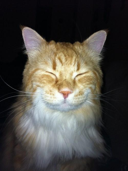 its-caturday