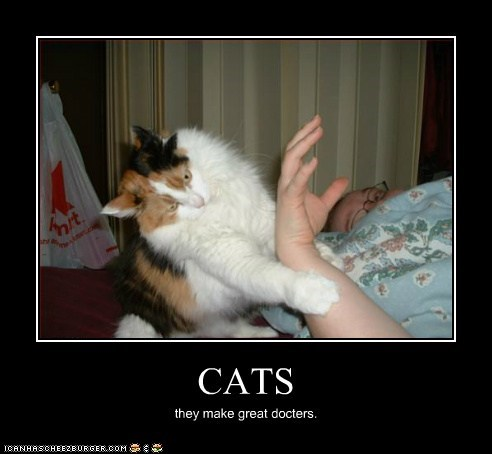 CATS they make great docters.