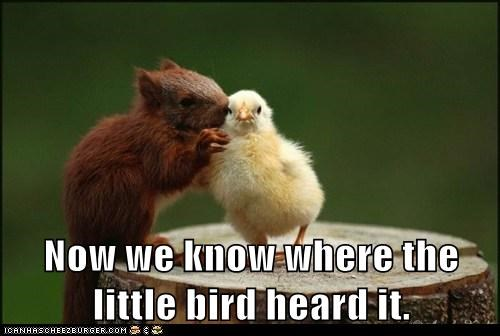 bird,idiom,little bird,rumor,saying,secret,squirrel