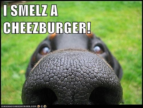 Cheezburger Image 6520937472