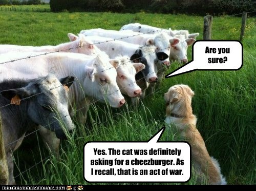 cat cheezburger cows dogs information report war - 6520985088