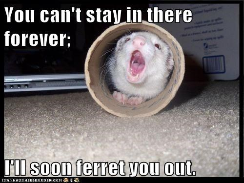 cant-stay,ferret,forever,hiding,pun,tube