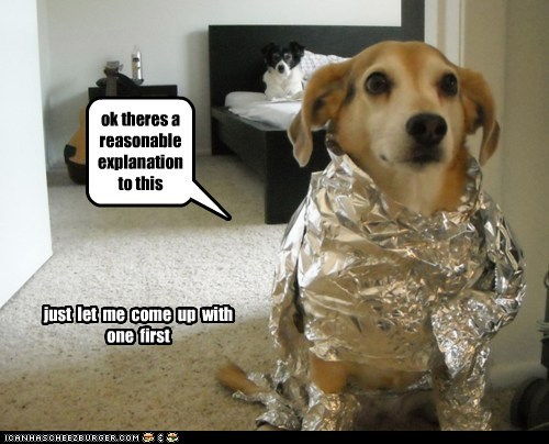 dogs i can explain reasonable tinfoil what breed