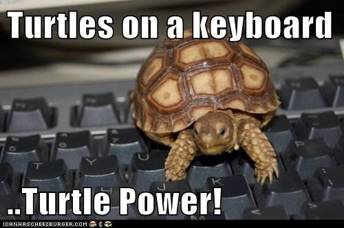 Turtles on a keyboard ..Turtle Power!