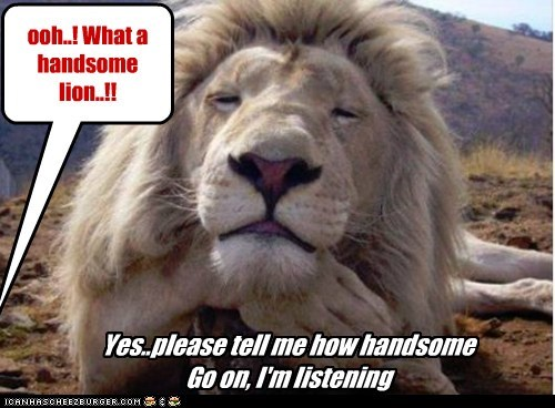 go on handsome im-listening lion pride vain