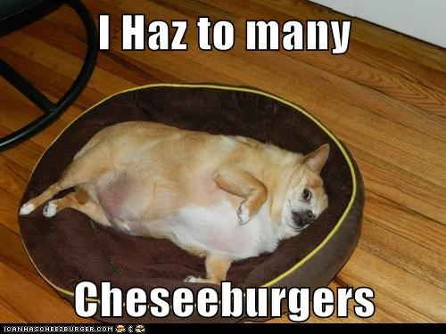 Cheezburger Image 6521604352