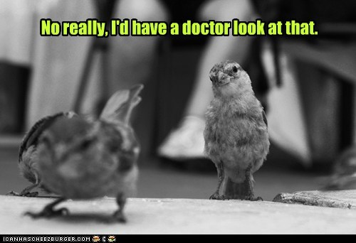birds,doctor,embarrassed,expert,showing,stop