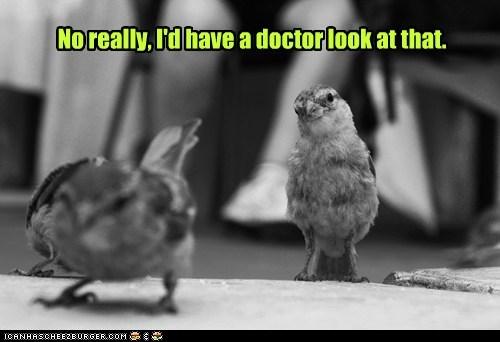birds doctor embarrassed expert showing stop - 6522301952